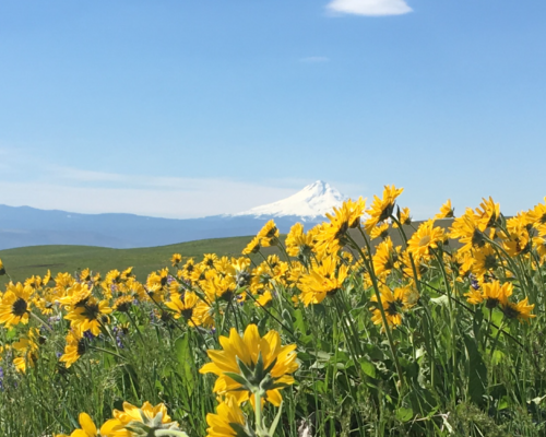 A Spring Hike through the Wildflowers